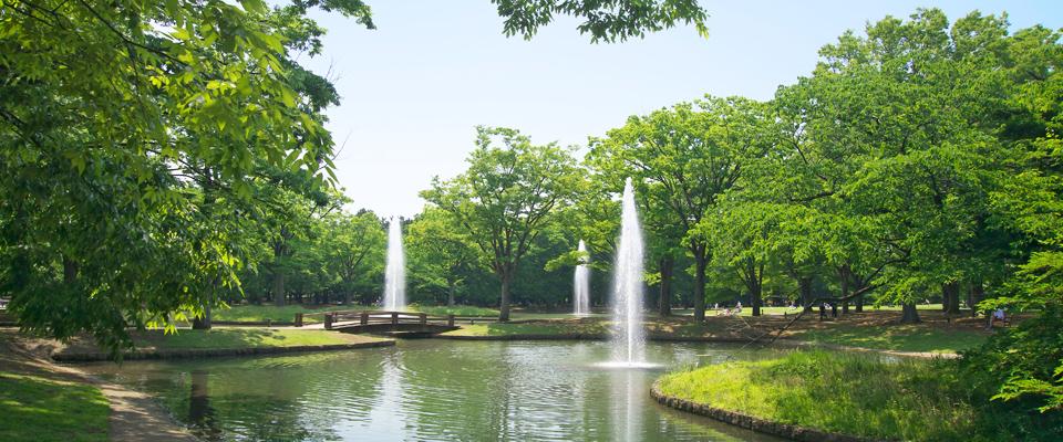 東京を代表する公園、代々木公園